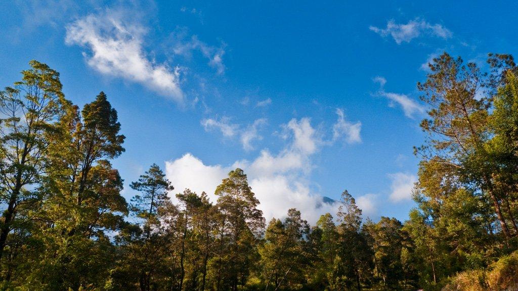 Pohon Menguning di Tawangmangu