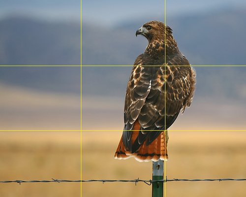 Contoh Komposisi Rule of Thirds